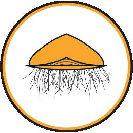 plancton velella
