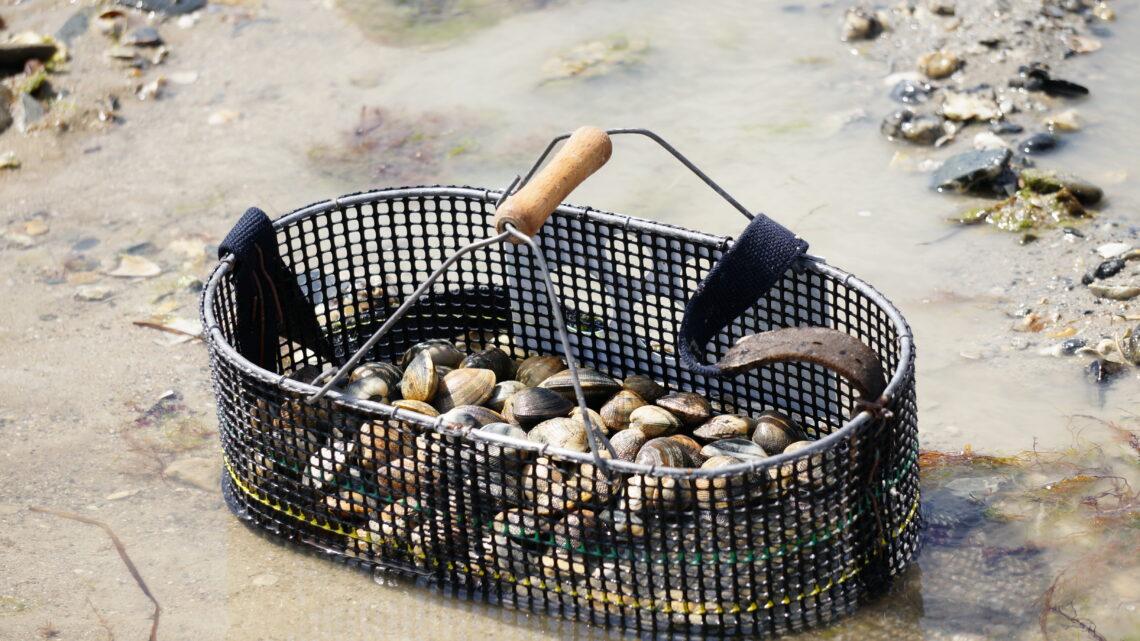 Pêche à pied - panier de palourdes